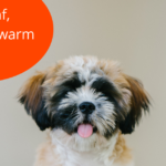 Cute and delicious names for male Shih Tzu