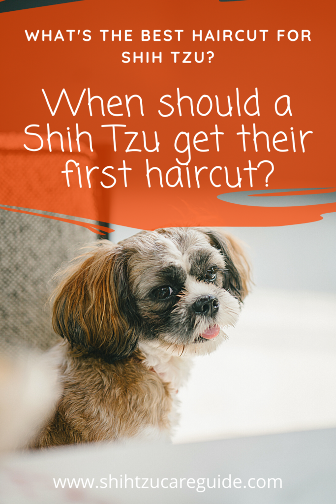 What is the best haircut for Shih Tzu? When should a Shih Tzu get their first haircut?   www.shihtzucareguide.com