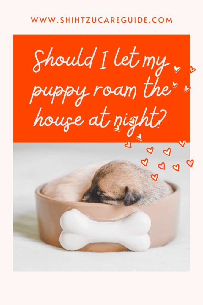 Should I let my puppy roam the house at night? www.shihtzucareguide.com
