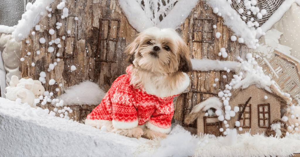 5-Funny-and-ugly-Christmas-sweaters-for-small-dogs-www.shihtzucareguide.com