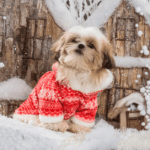11 ugly Christmas sweaters for small dogs that are hilarious and adorable