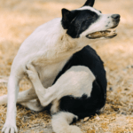 Is NexGard toxic to dogs: What everyone ought to know