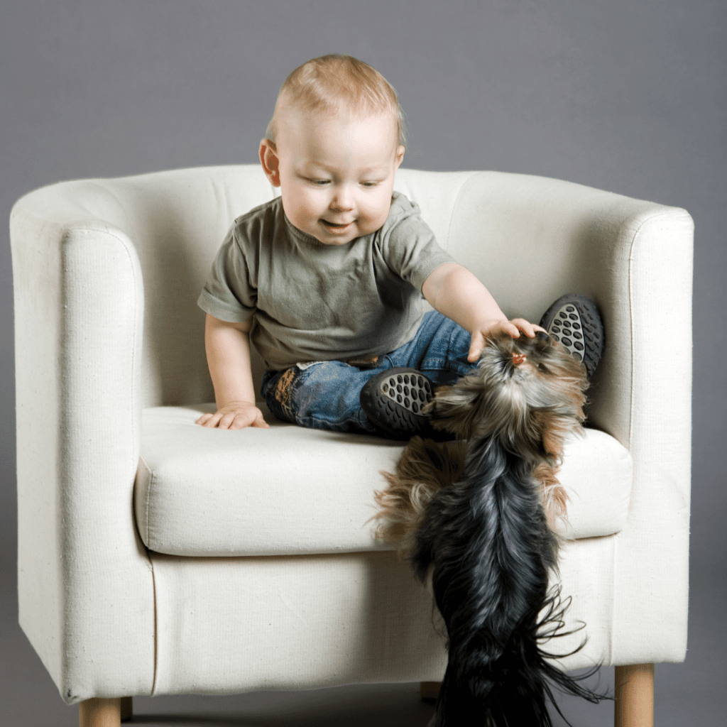 Is getting rid of a dog because of baby makes you a bad parent? www.shihtzucareguide.com