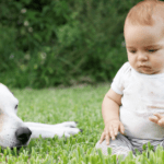 Is getting rid of a dog because of baby makes you a bad parent?