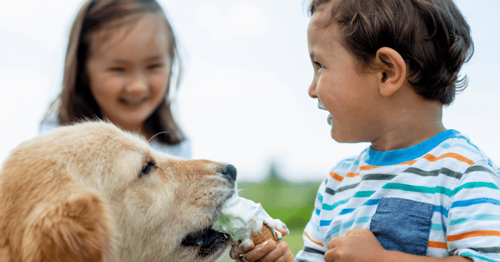 Is-lactose-free-ice-cream-safe-for-dogs-www.shihtzucareguide.com