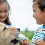 Is lactose-free ice cream safe for dogs? +Doggy-approved recipes inside