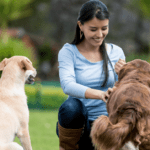 Should I visit my dog after rehoming? No, here's why